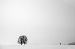 Tree in fog. And man royalty free stock photography