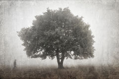 Tree in a fog Royalty Free Stock Photography