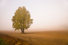 Tree in a fog Stock Photos