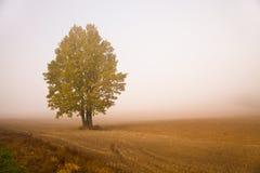 Tree in a fog Stock Photos