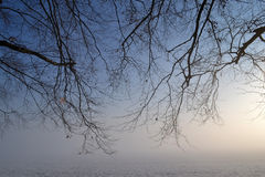 Tree in fog. Royalty Free Stock Photos