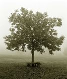 Tree in the Fog. Stock Photo