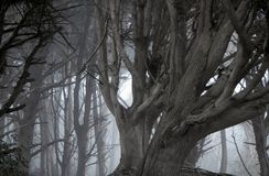 Tree and fog Stock Photo