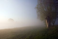 Tree and fog. Early morning fog Royalty Free Stock Image
