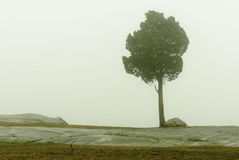 Tree in fog. Tree atop Fort Phoenix rocks in winter fog royalty free stock photography