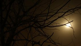 Tree in fog. Bare tree branches in fog stock footage