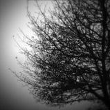 Tree in fog Royalty Free Stock Photo