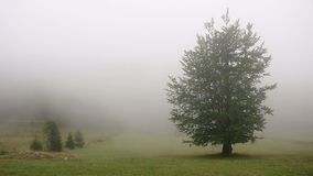 Tree in the fog countryside