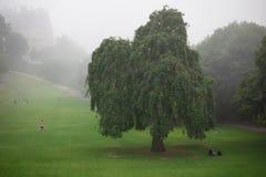Tree in fog in Edinburgh Stock Images