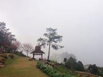 Tree among the fog Stock Photo