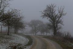 Tree in fog in green field. Landscape / Tree in fog in green field Royalty Free Stock Images