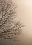 Tree in fog. Half tree in the frog Stock Images