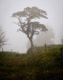 Tree in Fog Royalty Free Stock Photography