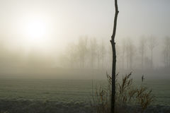Tree in the fog Royalty Free Stock Photography