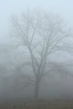 Tree in the fog. A large old tree in the fog stock photography