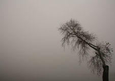 Tree in the fog. Lonely tree at lake at foggy day black and white Royalty Free Stock Image