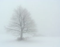 Tree in the fog Stock Image