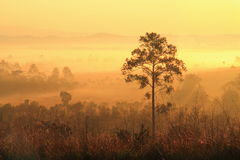 A tree in the fog and morning sunlight. Royalty Free Stock Images