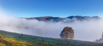 Tree on a fog and mountain background. Panoramic view stock photography