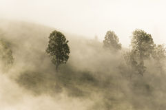 Tree in fog Royalty Free Stock Photos