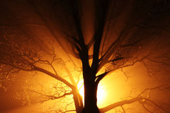 Tree in fog at night. Dark tree silhouette with rays of light Royalty Free Stock Images