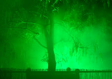 Tree in fog and night illumination Stock Photo