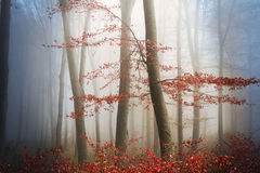Tree and fog Royalty Free Stock Photo