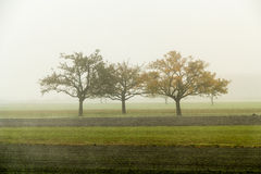 Tree in the fog. A thick mist was in the valley engulfing everything Stock Photos