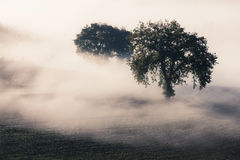 Tree in a fog Royalty Free Stock Photo