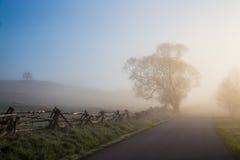 Tree, fog, way nad fence in autumn Stock Photos