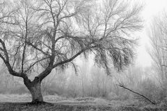 Tree in the Fog Stock Photos