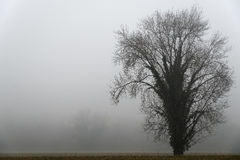 A tree in the fog. Winter atmosphere Royalty Free Stock Image