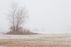 Tree in the fog on a winter beach. Tree without leaves in the fog on a winter beach royalty free stock images