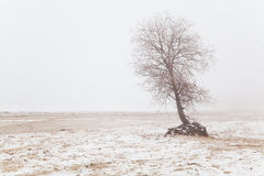 Tree in the fog on a winter beach Royalty Free Stock Image