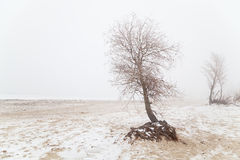 Tree in the fog on a winter beach Stock Images