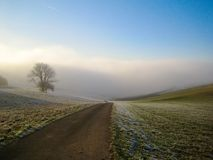 Tree in foggy field Royalty Free Stock Photo