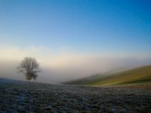Tree in foggy field Royalty Free Stock Photos