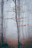 Tree in foggy forest. Dark scary forest like a fairy tale Stock Image