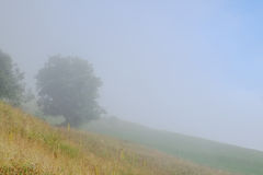 Tree on a foggy hill side Royalty Free Stock Photo