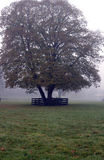 Tree foggy morning Royalty Free Stock Image