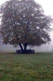 Tree foggy morning Royalty Free Stock Image
