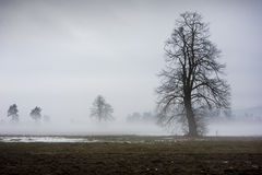 Tree on a foggy morning Royalty Free Stock Photos