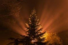 Tree in the foggy night Stock Photos