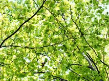 Trees in spring time Royalty Free Stock Photo