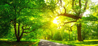 Tree foliage in morning light Royalty Free Stock Photography
