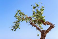 Tree with foliage separately against the sky Stock Image