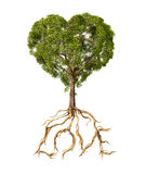 Tree with foliage with the shape of a heart and roots as text Lo. Ve. On white background Royalty Free Stock Images