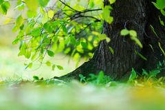 Tree foliage and sun Royalty Free Stock Image