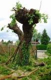 Tree Following Cutting Stock Image