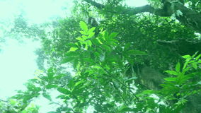 Tree footage. Footage of a tree, from the root up to the leaves stock footage